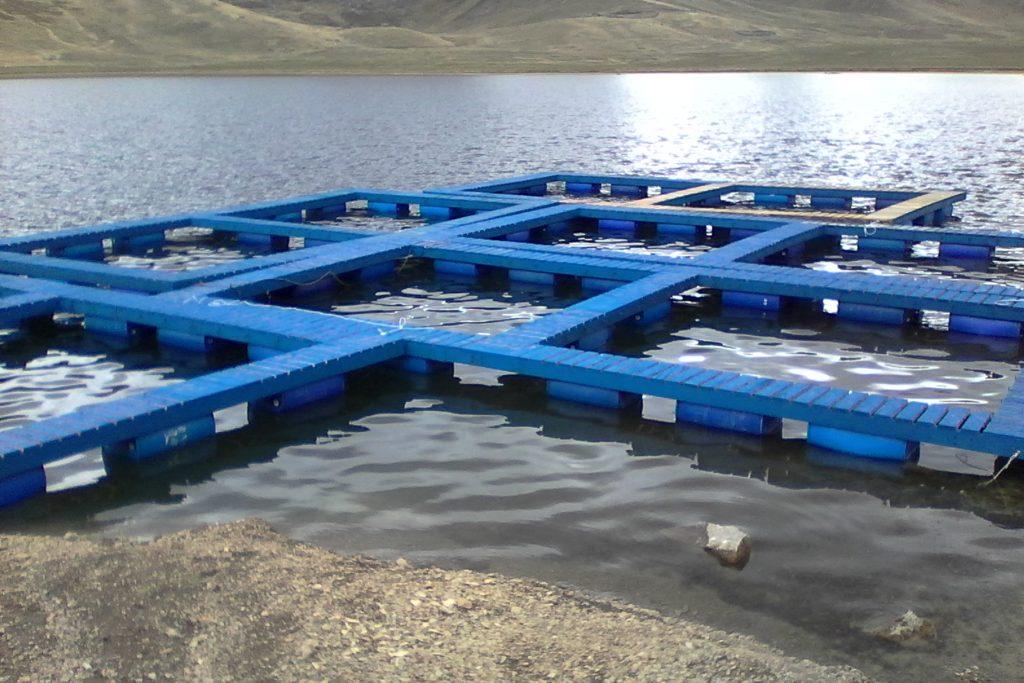 Construcci n y crianza de truchas en la laguna sacracocha for Crianza de truchas en lagunas